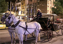 Ride Horse Carriage
