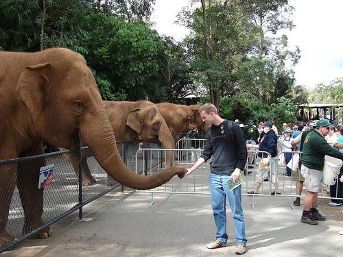 Jpt Tours Australia Zoo